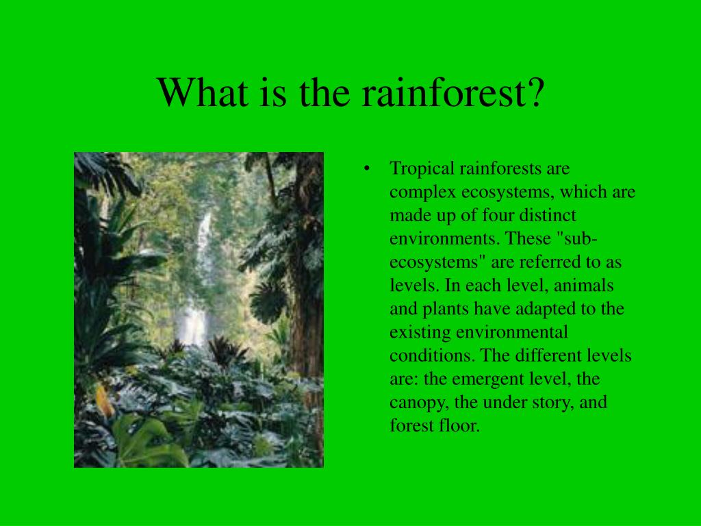 What is the rainforest?