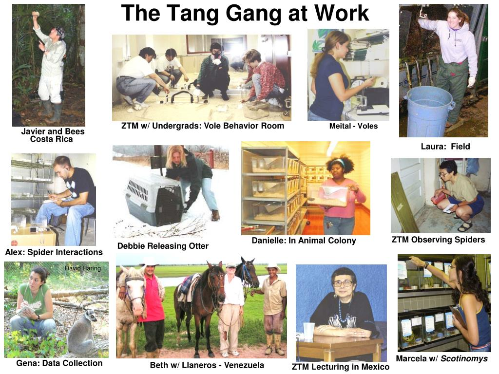 the tang gang at work l.