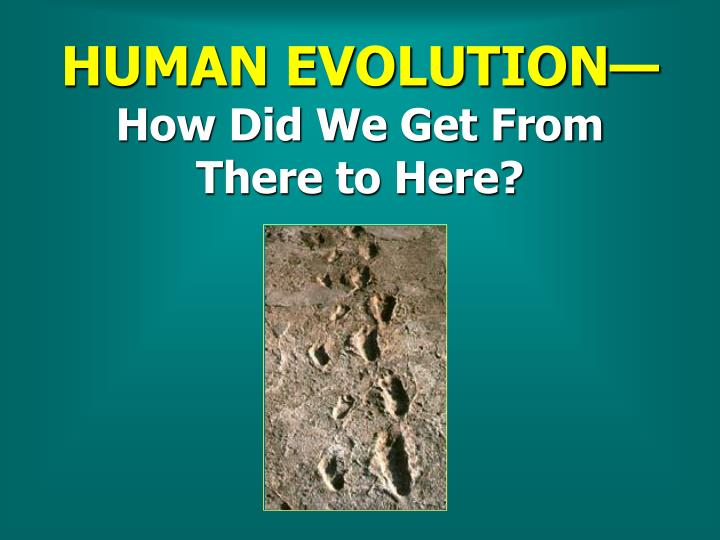 human evolution how did we get from there to here n.