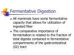 fermentative digestion
