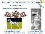 dalmatian dog native croatian