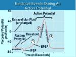 electrical events during an action potential