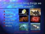 what are some living things we find in the ocean