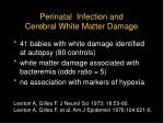 perinatal infection and cerebral white matter damage