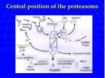 central position of the proteasome
