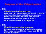 enzymes of the ubiquitination