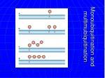 monoubiquitination and multimubiquitination