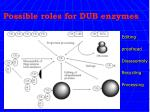 possible roles for dub enzymes