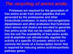 the recycling of amino acids