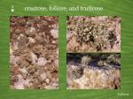 p crustose foliose and fruticose