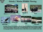 grizzly marine wildlife viewing