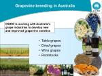 grapevine breeding in australia