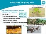 rootstocks for quality wine