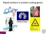 rapid evolvers in protein coding genes