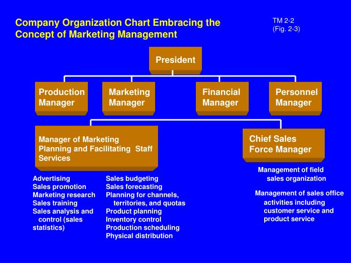 Company Organization Chart Embracing the Concept of Marketing Management