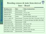 breeding crosses traits from derived lines brazil