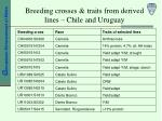 breeding crosses traits from derived lines chile and uruguay