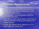 perennial maintenance