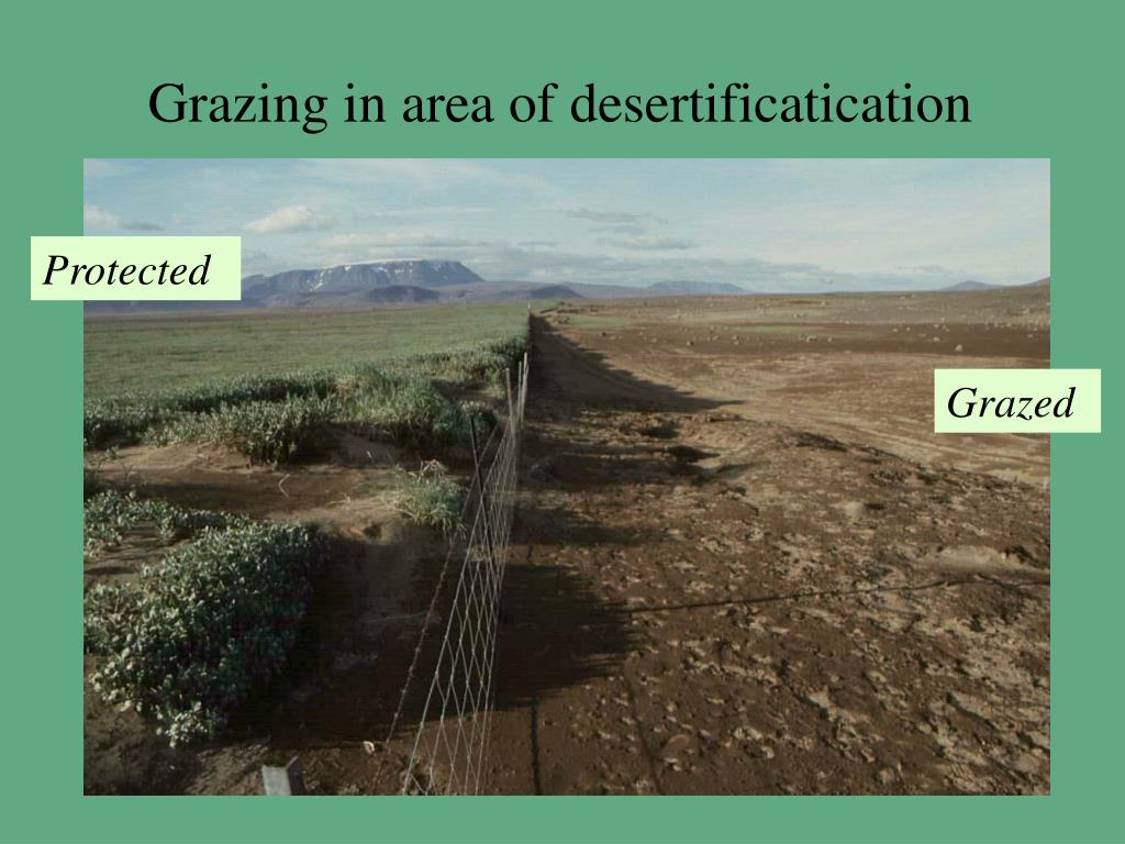 Grazing in area of desertificatication