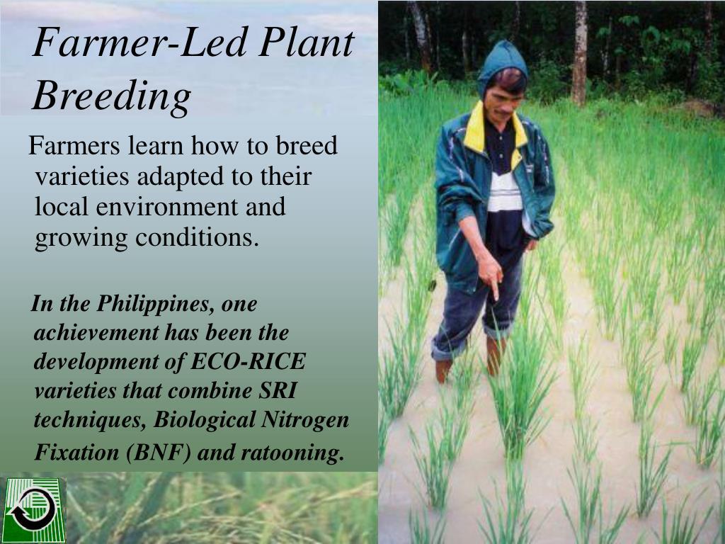 Farmer-Led Plant Breeding