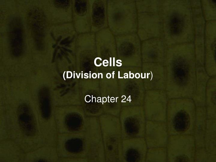 cells division of labour n.