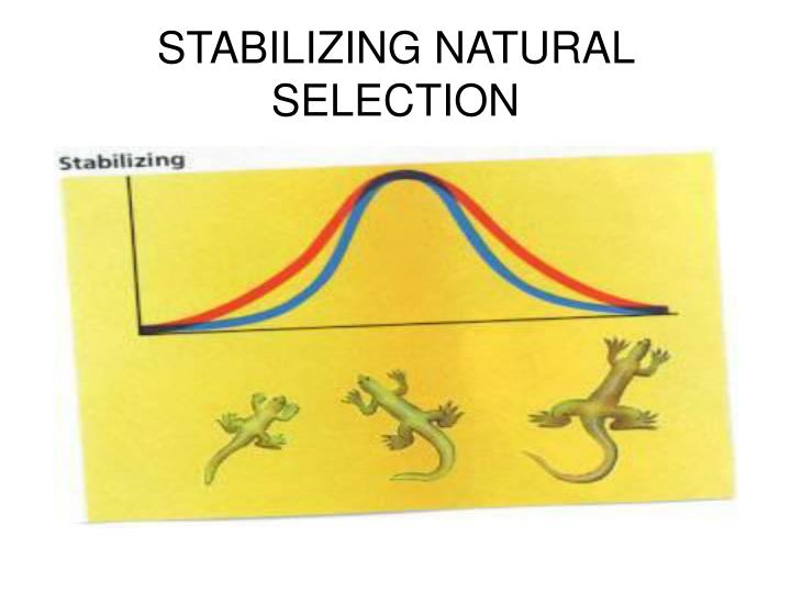 STABILIZING NATURAL SELECTION