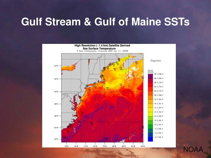 Gulf Stream & Gulf of Maine SSTs