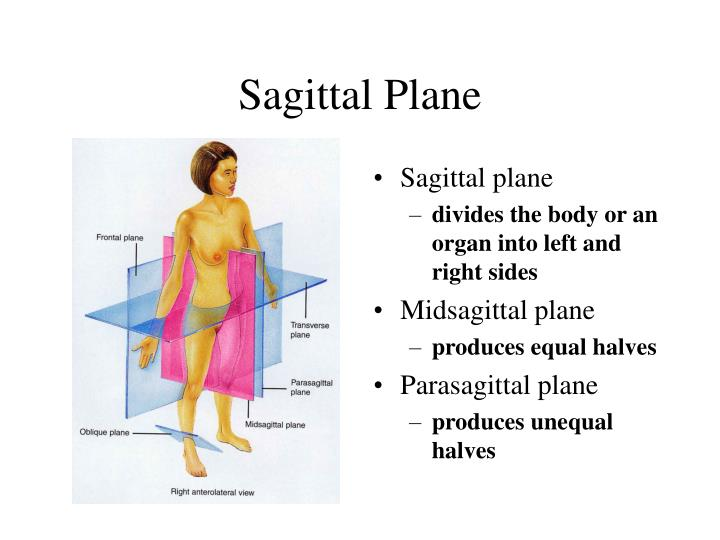 divides body or organ into unequal right and left sections