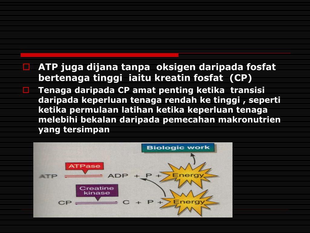 ATP juga dijana tanpa  oksigen daripada fosfat bertenaga tinggi  iaitu kreatin fosfat  (CP)