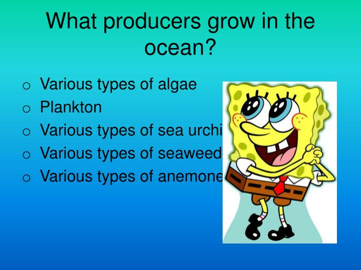 What producers grow in the ocean