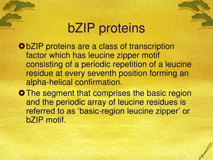 bZIP proteins
