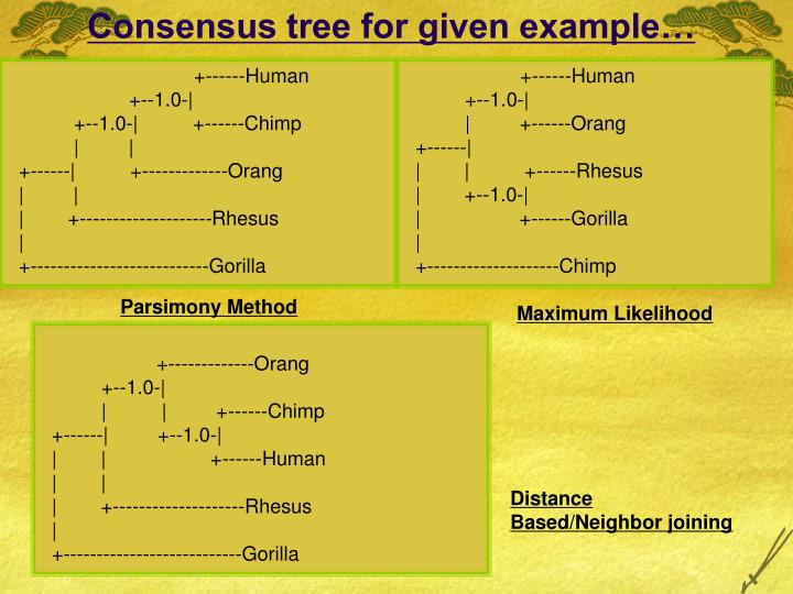 Consensus tree for given example…