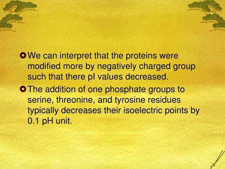 We can interpret that the proteins were modified more by negatively charged group such that there pI values decreased.