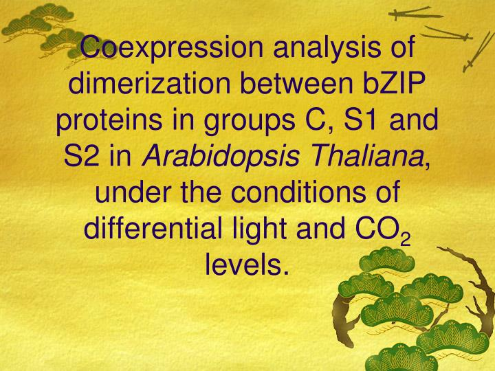Coexpression analysis of dimerization between bZIP proteins in groups C, S1 and S2 in