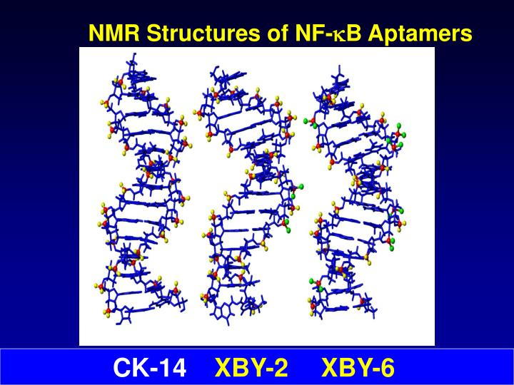 NMR Structures of NF-