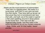 diction pilgrim at tinker creek