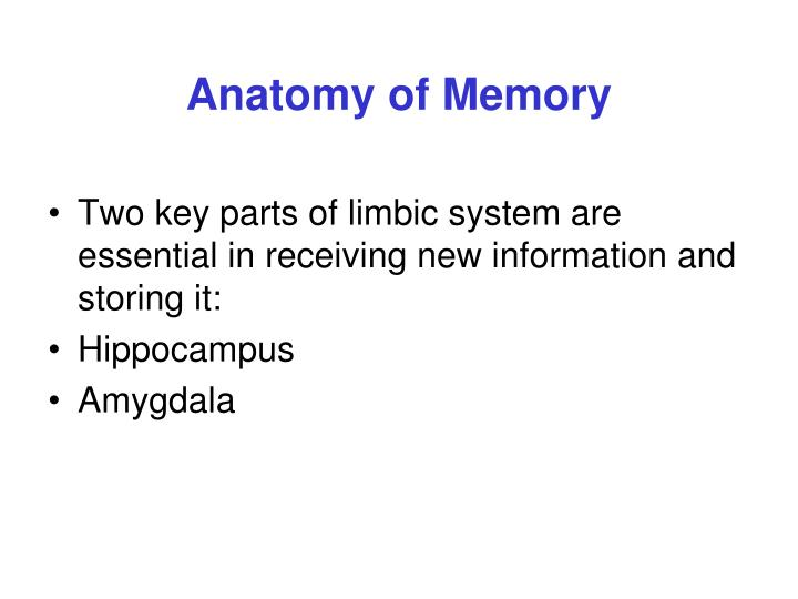 Ppt Memory Powerpoint Presentation Id1032487
