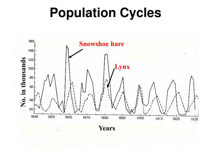 Population Cycles