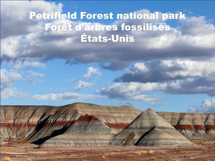 Petrifield Forest national park