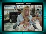 shelby gets a haircut