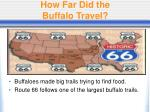 how far did the buffalo travel