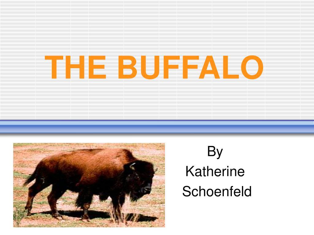 the buffalo l.