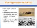 what happened to the buffalo