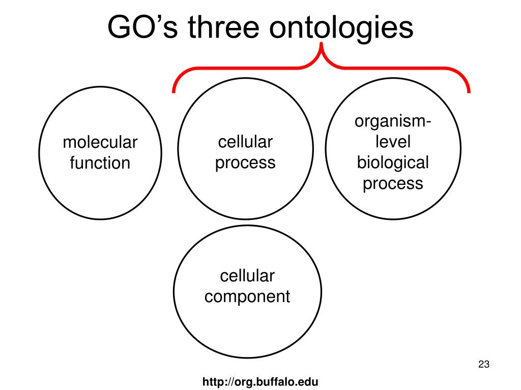 GO's three ontologies