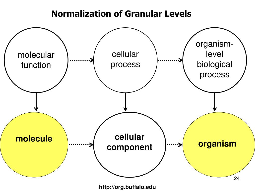 Normalization of Granular Levels