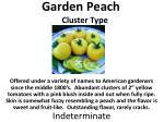 garden peach cluster type
