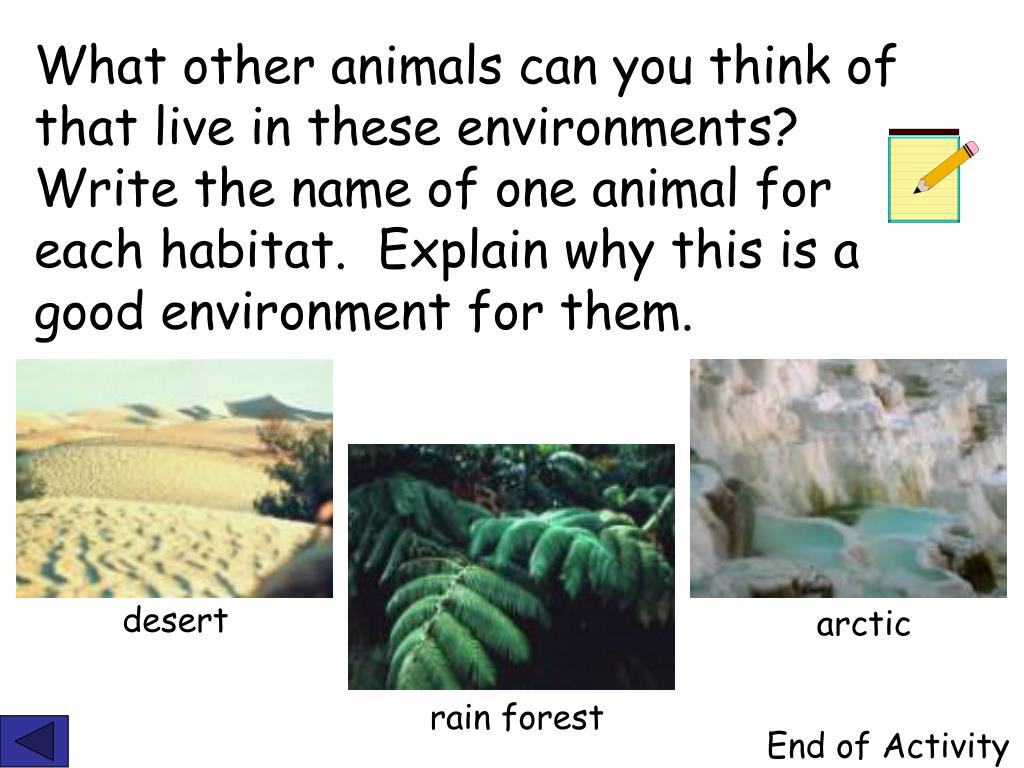 What other animals can you think of