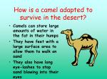 how is a camel adapted to survive in the desert