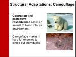 structural adaptations camouflage