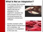 what is not an adaptation